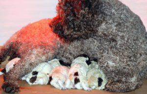 rella e cucciolip